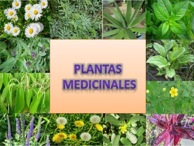 Taller de plantas medicinales 2016 for Plantas medicinales y ornamentales