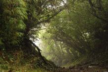 Bosque_Nuboso_Monteverde